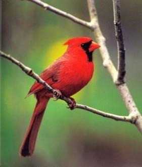 blog du relais du vert boispourquoi les oiseaux chantent ils. Black Bedroom Furniture Sets. Home Design Ideas