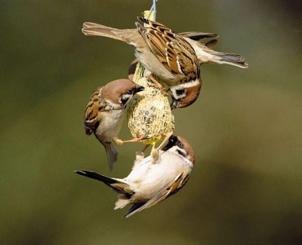 Blog du relais du vert boisconfectionner des repas maison pour les oiseaux - Pour effrayer les oiseaux ...
