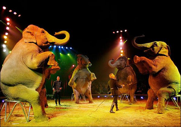 image animaux du cirque