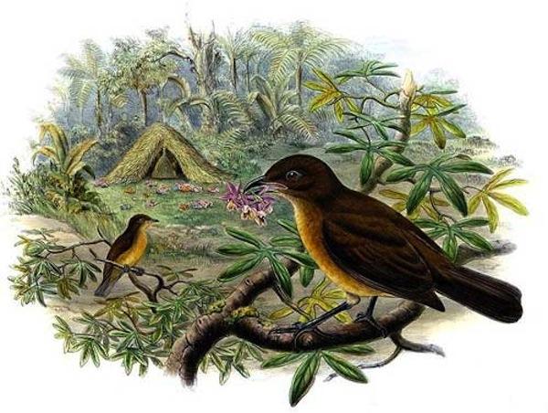 Blog du relais du vert boisincroyable oiseau jardinier for L oiseau jardinier