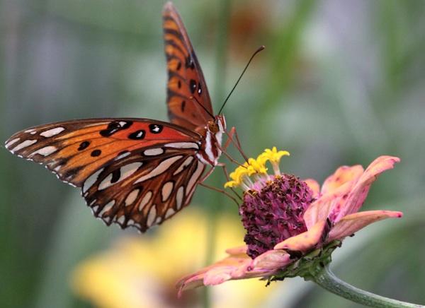 Blog du relais du vert boiscomment attirer les papillons - Comment attirer les papillons dans son jardin ...