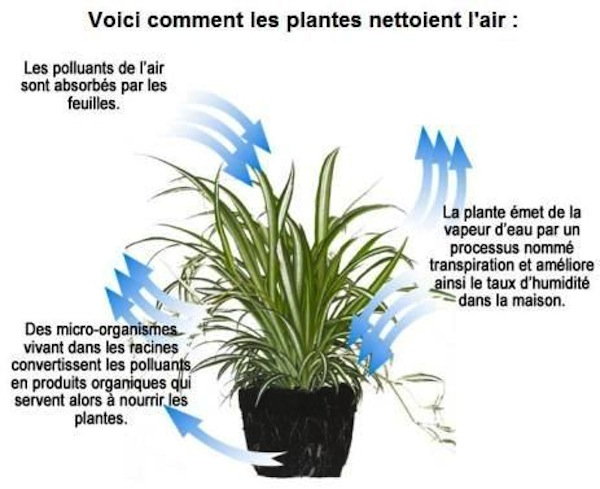 blog du relais du vert boisdes plantes pour lutter contre la pollution. Black Bedroom Furniture Sets. Home Design Ideas